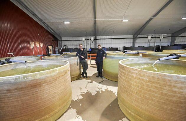 Johan och Mikael vid de stora bassängerna som är slutna system som inte förorenar som fiskodlingar i havet.