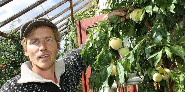 Lär dig prata som danske tv-bonden Frank Erichsen