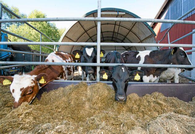Irland, landet som årligen exporterar råvaror som nötkött för miljardbelopp, samarbetar för att nå sina mål.