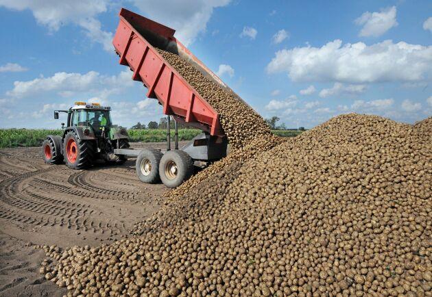 Hamstringen till följd av coronautbrottet har fått priset på matpotats att stiga. Potatisen som skördades i höstas spås räcka en bra bit in i maj, uppger Potatisodlarna.