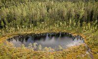 Metsä köper skyddsvärd skog