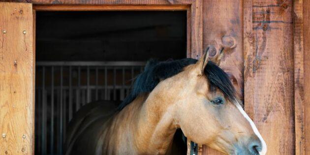 Hund, häst, älg – här är Sveriges 10 farligaste djur – man blir förvånad...