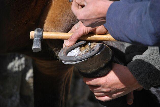 Arkivbild. Sensorerna placeras mellan hästens hov och sko.