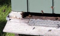 Fler bin med halmbalar
