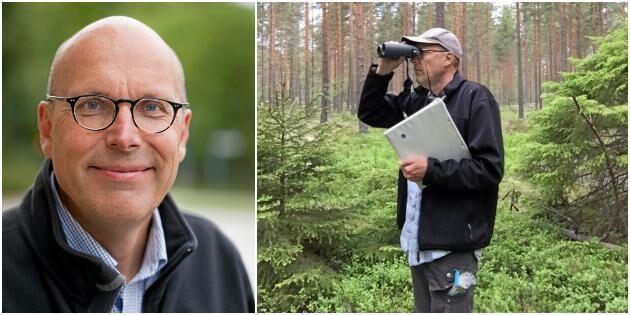"""""""Styrkan med vår undersökning är att den gjorts mitt inne i bestånden av produktionsskog, och det är nog skogar som fågelskådare sällan varit i"""", säger Matts Lindbladh."""