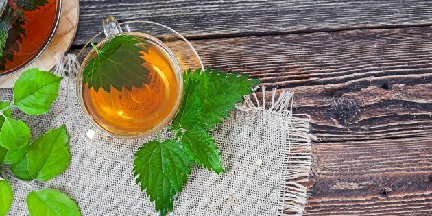 Vitaminrikt te på brännässlor – från egen skörd
