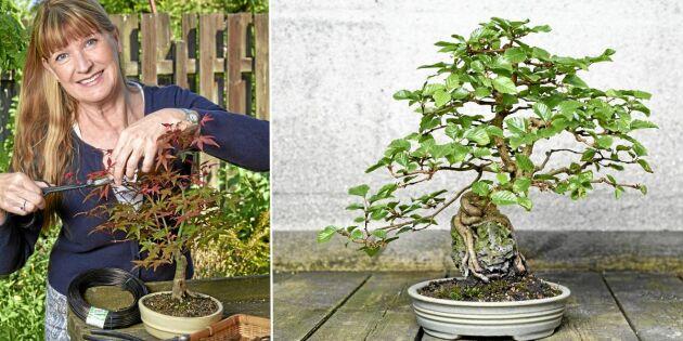 GUIDE: Så gör du din egen bonsai – av svenska träd!