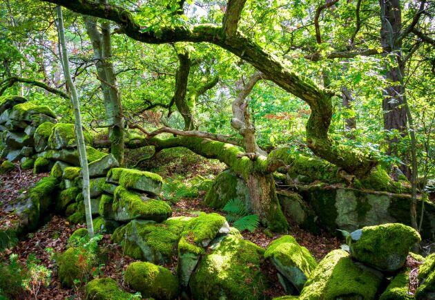 Skogsstyrelsen fortsätter att peka ut större och större områden som bevarandevärda, vilket leder till ekonomiska förluster och allt mindre att säga till om vad gäller den enskilda egendomen, menar debattörerna.