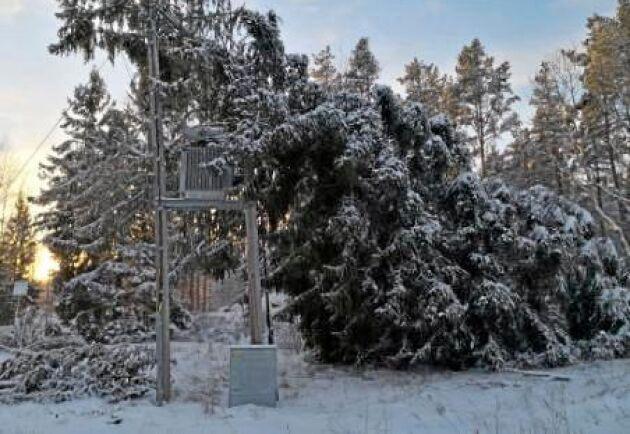 Träd som fallit över ledningar måste bort, så att montörerna kan komma åt och reparera.