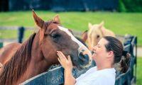 Inte bara minne som en häst