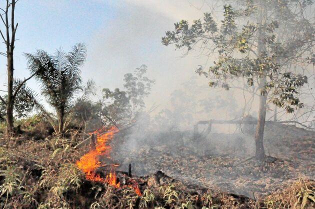 Produktiv skog måste återskapas på avskogad mark som inte behövs för till exempel livsmedelsproduktion.