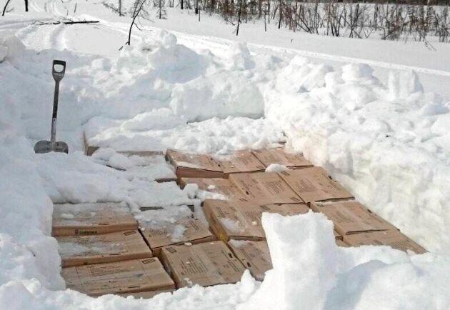 Planten grävs ner i snön.