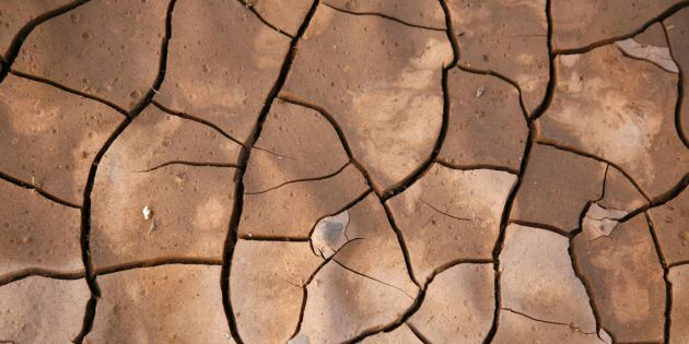 Spanska bönder har tappat halva spannmålsskörden
