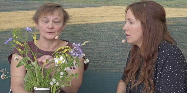 ATL TV: Samzoner ska ge föda och boplatser