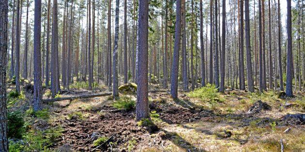 Skogsägarföreningarna planerar inte att ändra sitt skogsinnehav