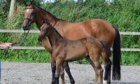 48 hästar säljs på auktion