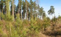 Ta vara på skogens förmåga att binda kol