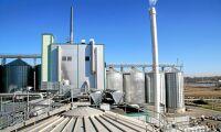 Salmonella i etanolfabriken