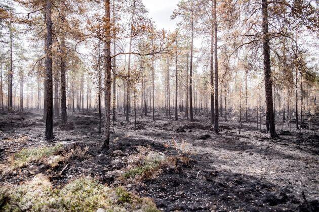 Karl-Johan Gunnarsson, Helene Lantz, Mats Blomberg och Anders Åkesson har i fyra år kämpat för att få ledningen nedgrävd.