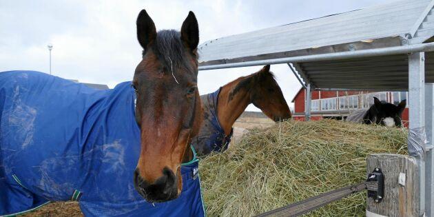 Foderbrist: Så fodrar du hästen säkert i vinter