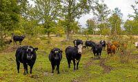 Jordbruksverket har rätt att ta ut avgift