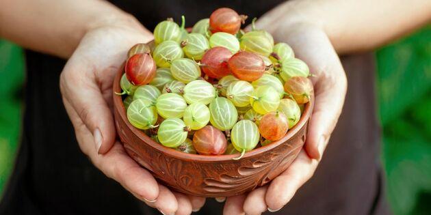 Mat i säsong: 12 svenska råvaror du ska passa på att äta i juli
