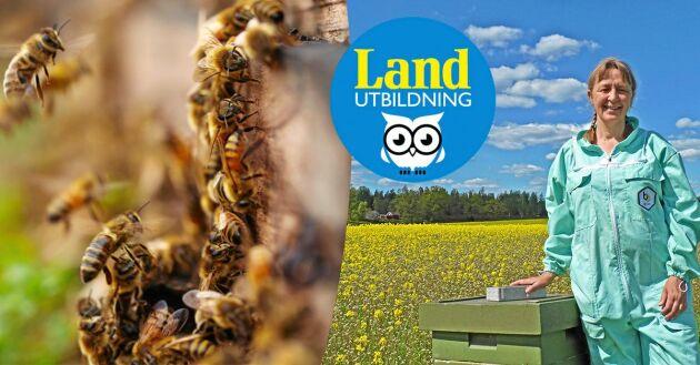 Gå Lands nybörjarkurs online och lär dig biodling!