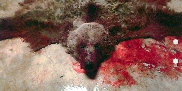 Tre döms till fängelse för jaktbrottshärva