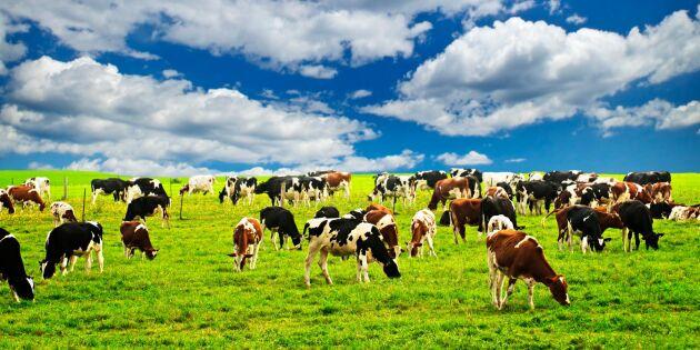 Regeringar behöver mer kunskap om lantbrukares ekonomi