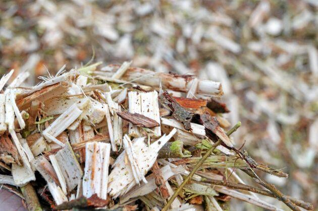 Biomassa från Salix visade sig ha en direkt klimateffekt.