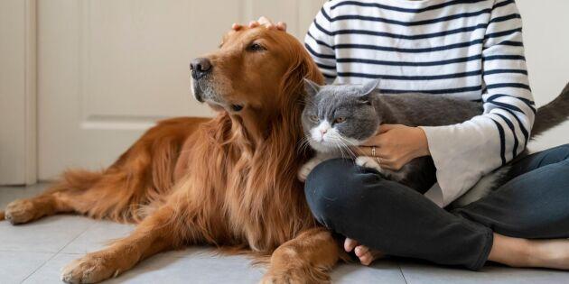 Därför är det hälsosamt att klappa din hund eller katt