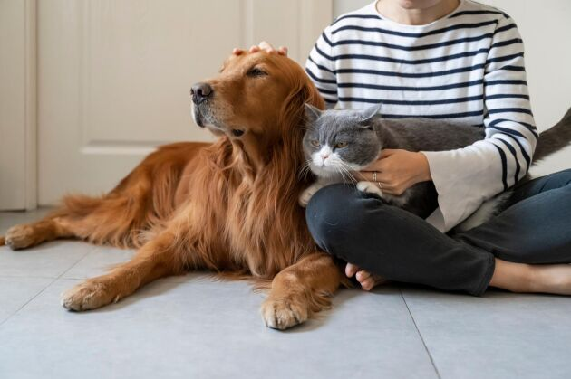 Att gosa med och klappa dina älskade djur är avstressande – på riktigt.