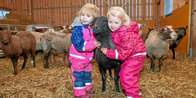 """Succé för nya bondgårdsförskolan: """"Vore kul om fler tog efter"""""""