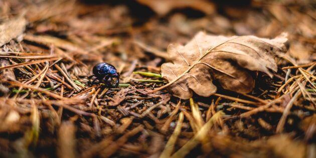 Växtätande insekter bidrar till klimatförändringar