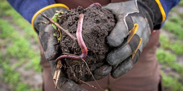 Specialutgåva: Lär dig mer om Conservation agriculture