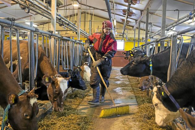 """37 kor finns i ladugården och det är Johanna Hellström som har ansvaret för korna och mjölkningen. """"Jag har skött kor sedan barnsben,"""" säger hon."""