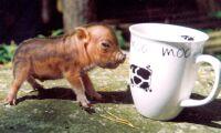 Djurrättsaktivister förmänskligar djur