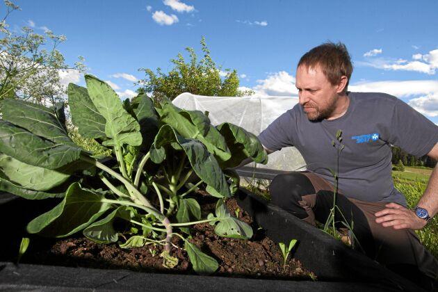 Förra vinterns plötsliga prishöjning för vissa grönsaker stärkte Peter Bivesand i hans uppfattning om att odla för eget behov.