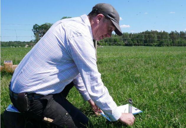 Tomas Olsson lägger mycket tid på att få ut det mesta av betet till sina djur.