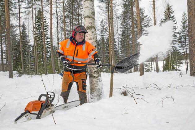 Börja med att sparka upp och skotta stammen fri från snö.