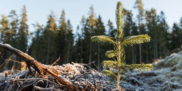 """""""Plantor från Norrplant är undermåliga"""""""