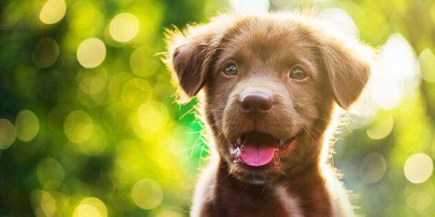 Lär dig hundspråket – här är 17 signaler som visar vad hunden vill