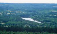 Skogsstyrelsen: Långt kvar till skogens miljömål