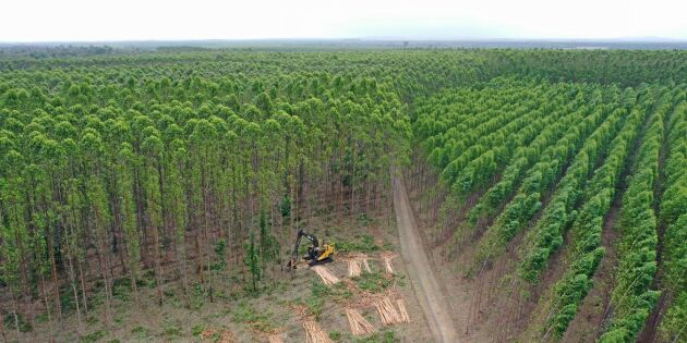 Småbrukare vägrar ge upp mot skogsjätten
