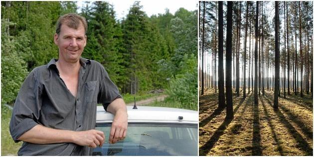 Svenska skogsägare kan gräva guld i Baltikum