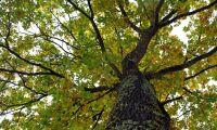 """""""Prat om förgraning orättvist – lövträden ökar"""""""