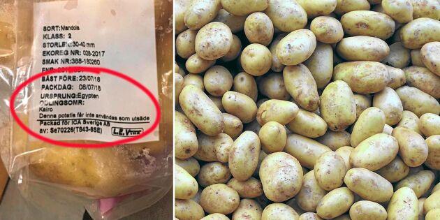Trots svensk högsäsong – därför säljer Ica potatis från Egypten