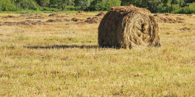 Efter torkan: Kommuner lovar fortsatt hjälp till bönder