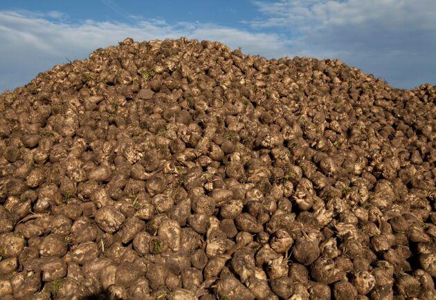 Mark- och miljödomstolen stoppar tillfälligt Kemikalieinspektionens beslut om nöddispens för sockerbetsodlarna att använda det förbjudna växtskyddsmedlet Gaucho WS 70.