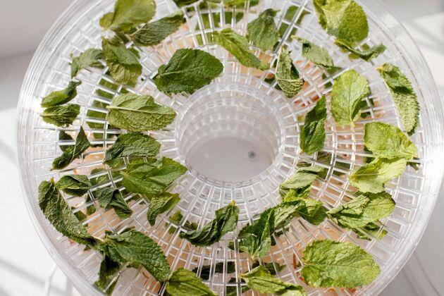 Torka örter i svamptork eller utbredda på ett lakan eller tidningar.